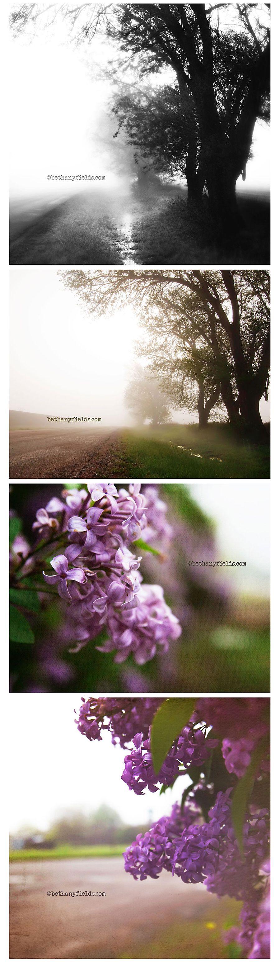 April2110_foggy
